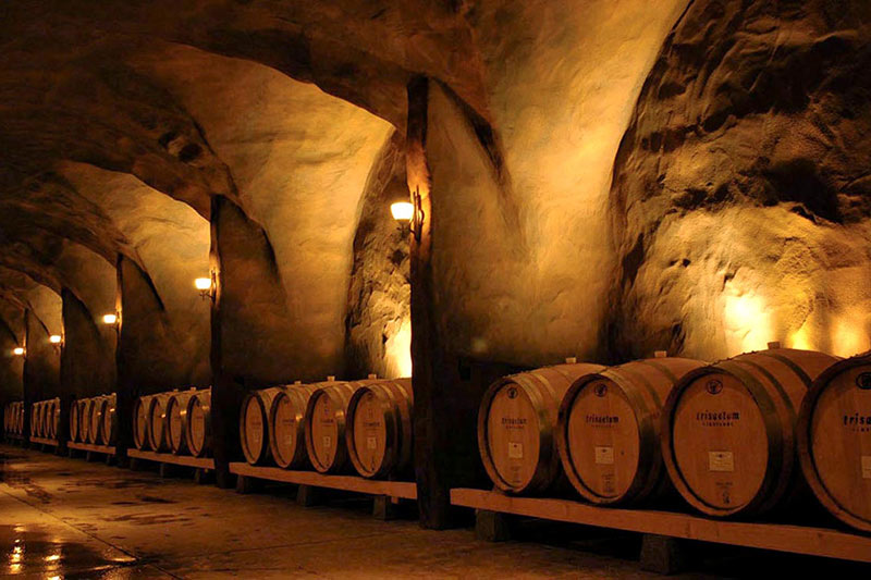 Oregon Wineries with Barrel Caves Trisaetum