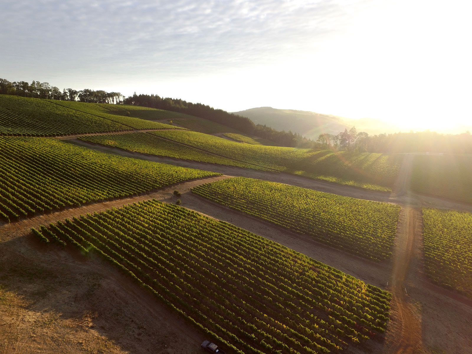 Oregon wine country sunrise Hyland Estate McMinnville Foothills