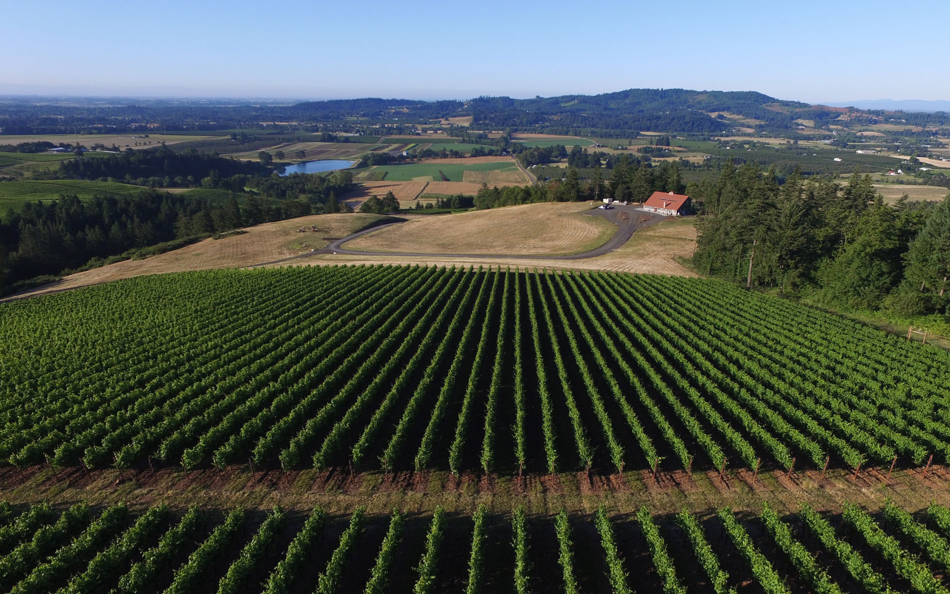 Naked wines launches new fundraiser for south african winemakers