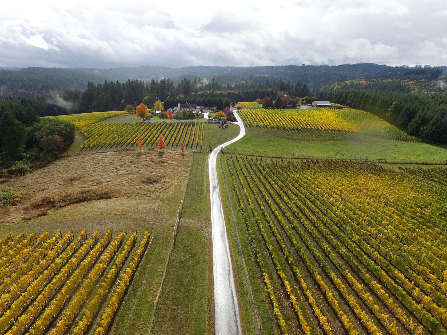 Driveway through Benza Vineyards