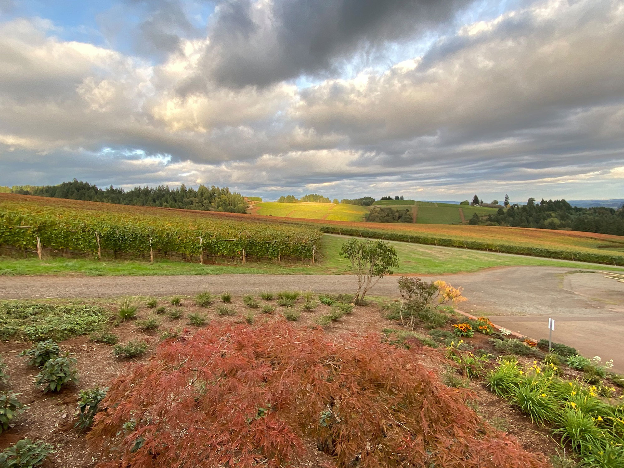 Knudsen vineyard view
