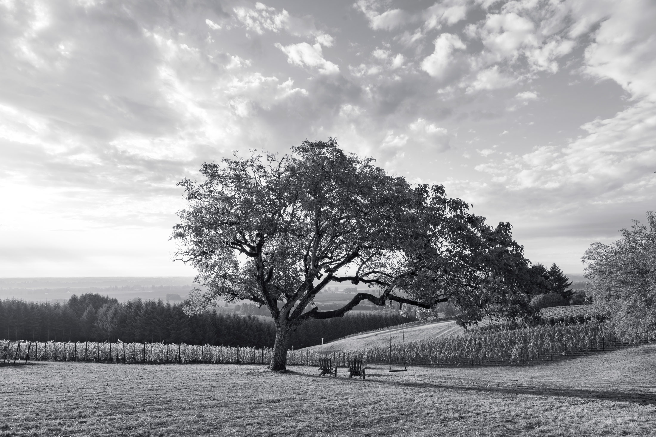 Walnut tree with chairs and swing, vineyards